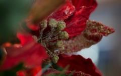 RMU: Last-minute DIY gift ideas for the Holiday season