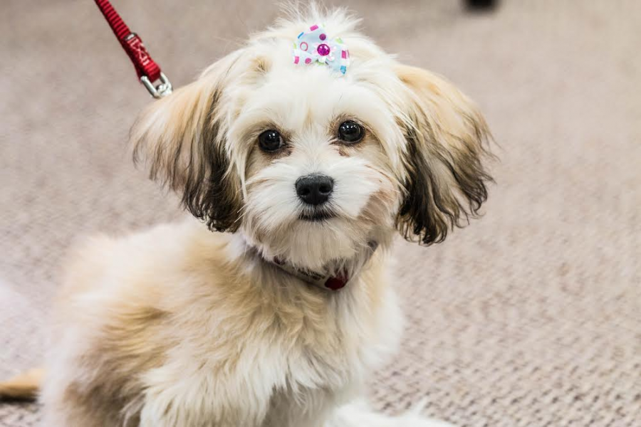 Counseling Center adopts new dog to become Therapet