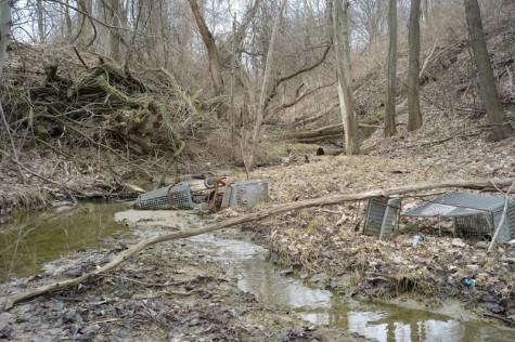 1.Visible in the shallow stream that flows between RMU's Moon campus and Kmart, are the rotting remains of well over fifty shopping carts, in various stages of decay