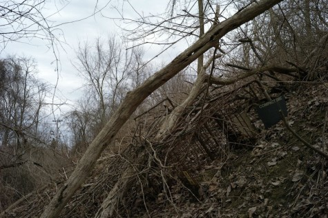 Looking up stream, more carts and a rotted out 55-gallon drum sit abandoned among other litter