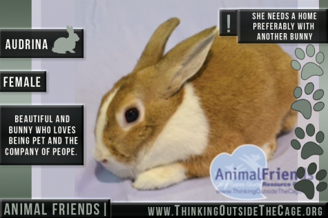 Pet of the week: Audrina