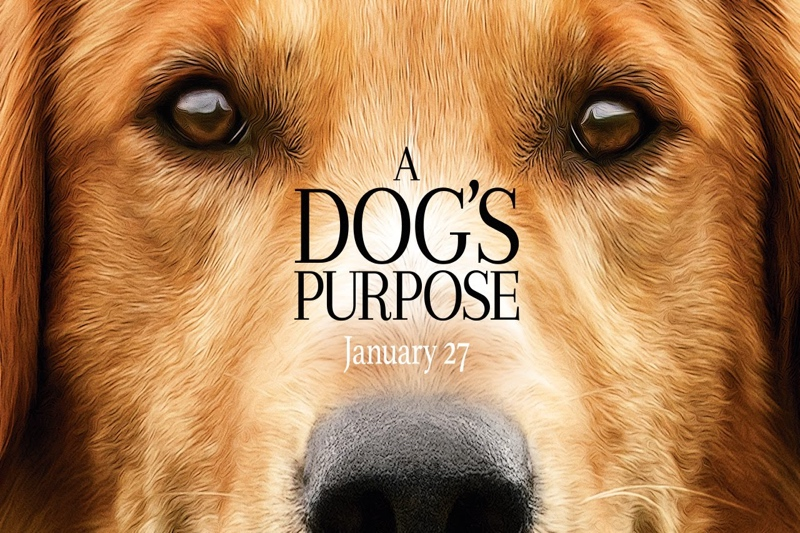 A+Dog%27s+Purpose+Review