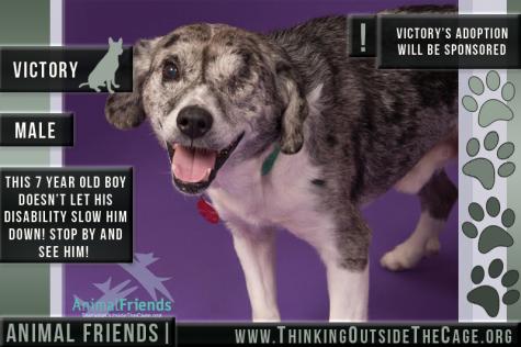 Pet of the Week: Victory