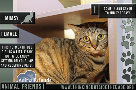 Pet of the Week: Mimsy