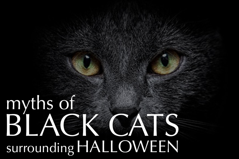 Debunking the myth of black cats