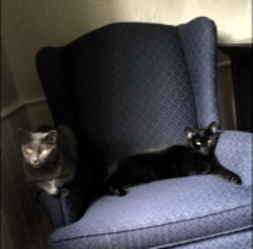 The sisters share a chair but not the same color.