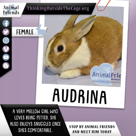 Pet of the Week: Audrina