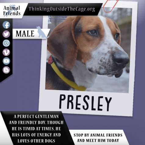 Pet of the Week: Presley