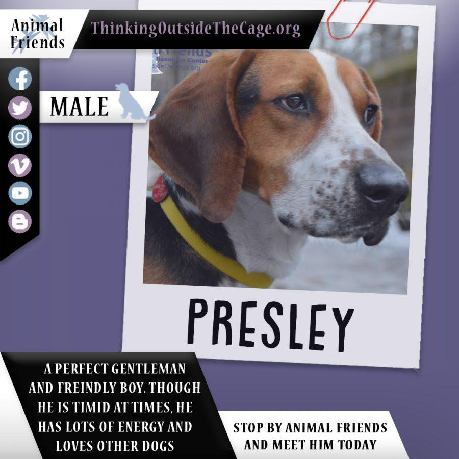 Pet+of+the+Week%3A+Presley