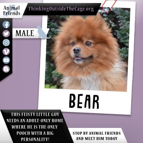 Pet of the Week: Bear