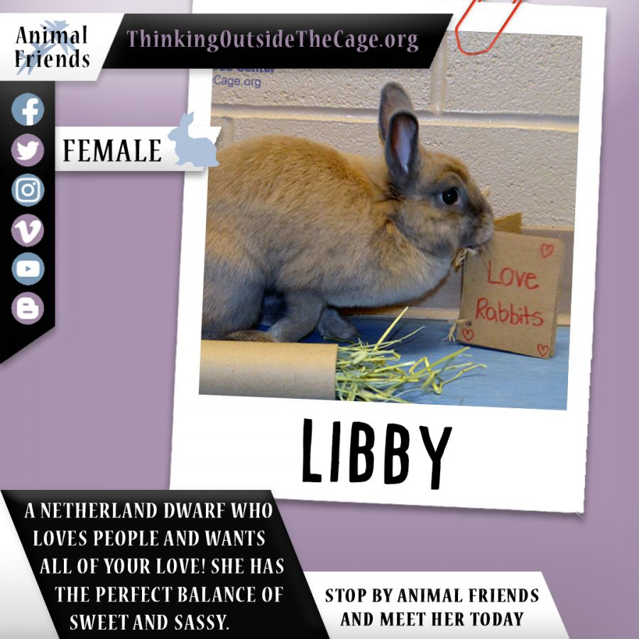 Pet of the Week: Libby