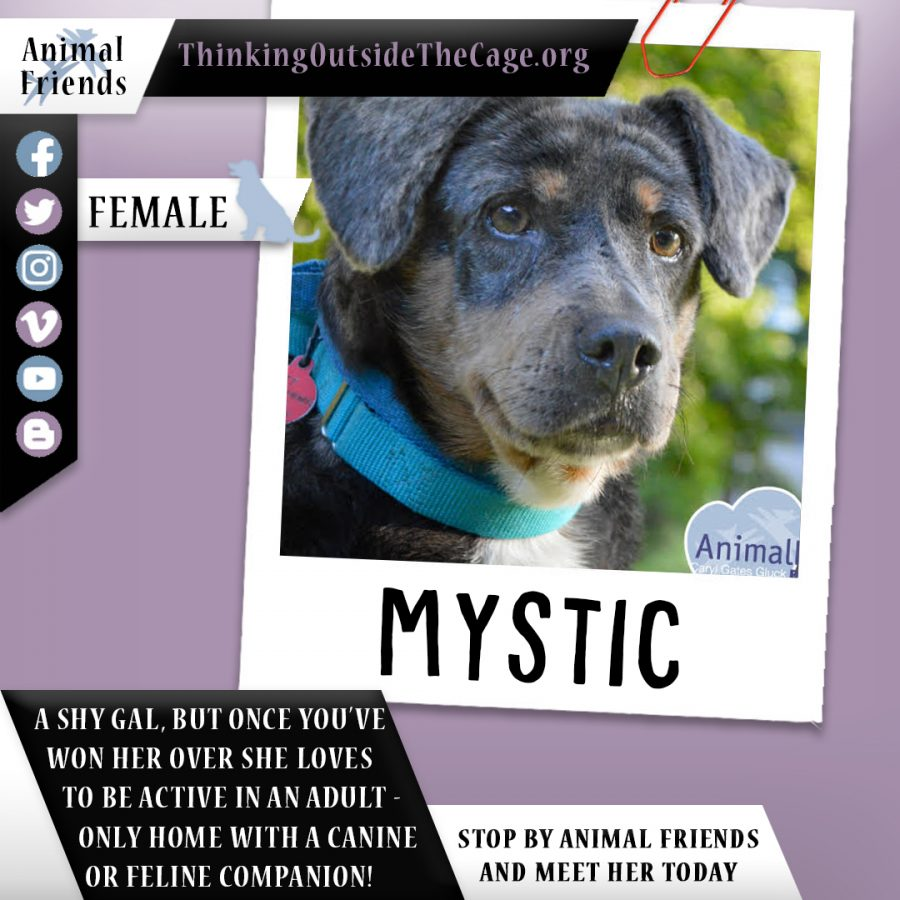 Pet of the Week: Mystic