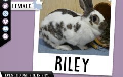 Pet of the Week: Riley
