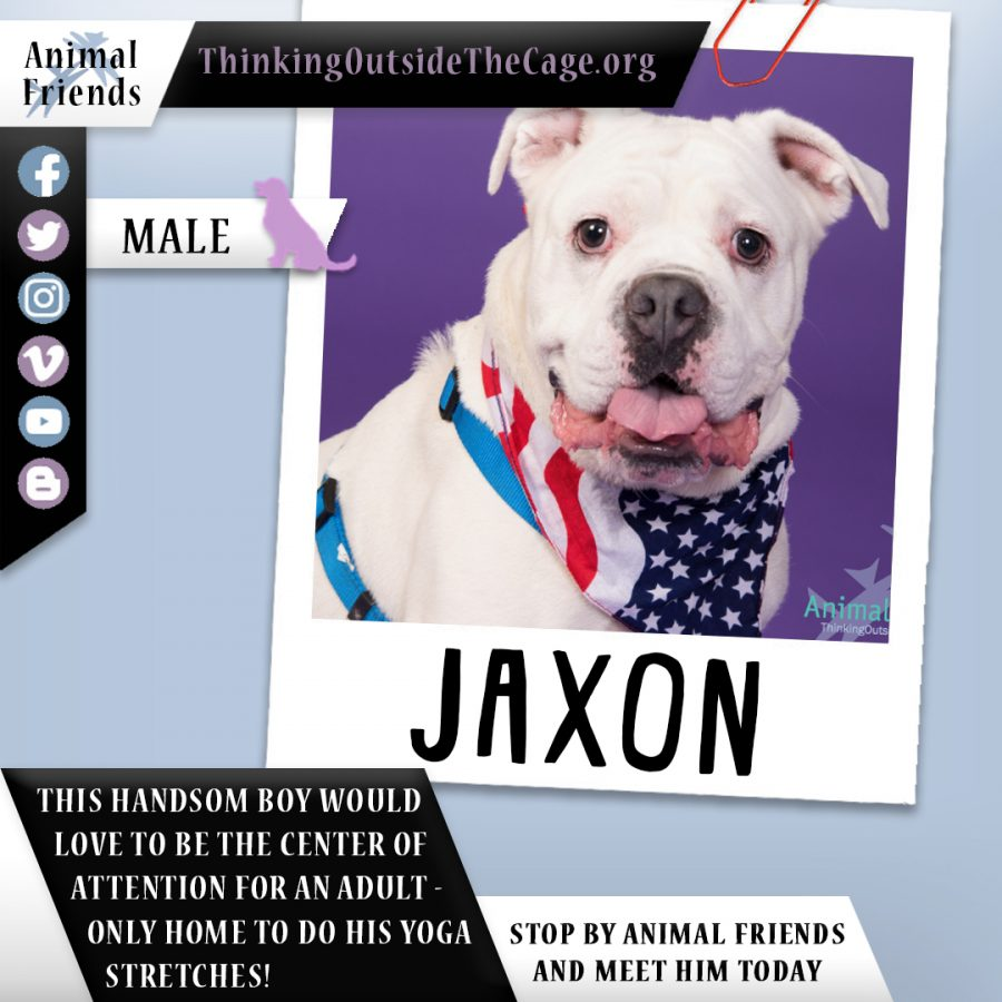 Pet of the Week: Jaxon