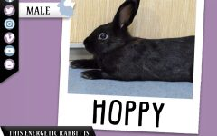 Pet of the Week: Hoppy