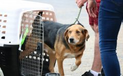Dogs land in Pittsburgh ready to start a new life