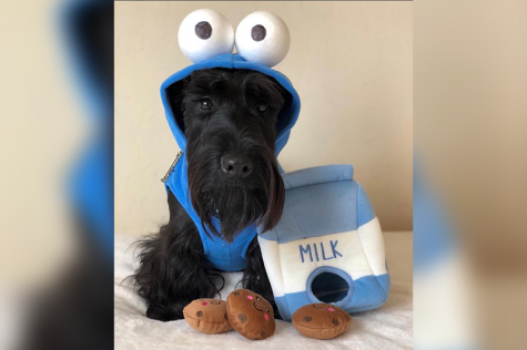 Dressing up your pet is a national event