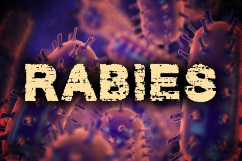 Raccoons captured test positive for rabies