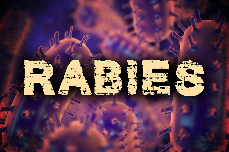 Raccoon captured in Indiana Twp. tests positive for rabies
