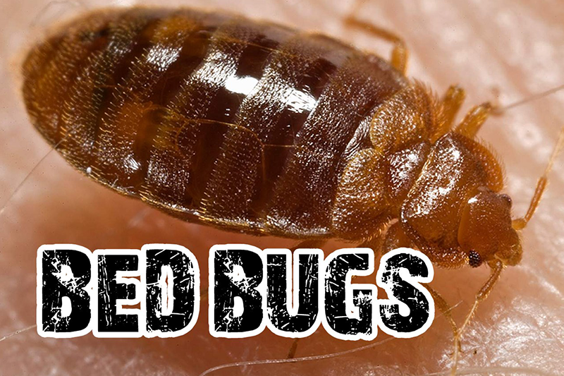 Student: Hancock dorm 'infested' with bed bugs