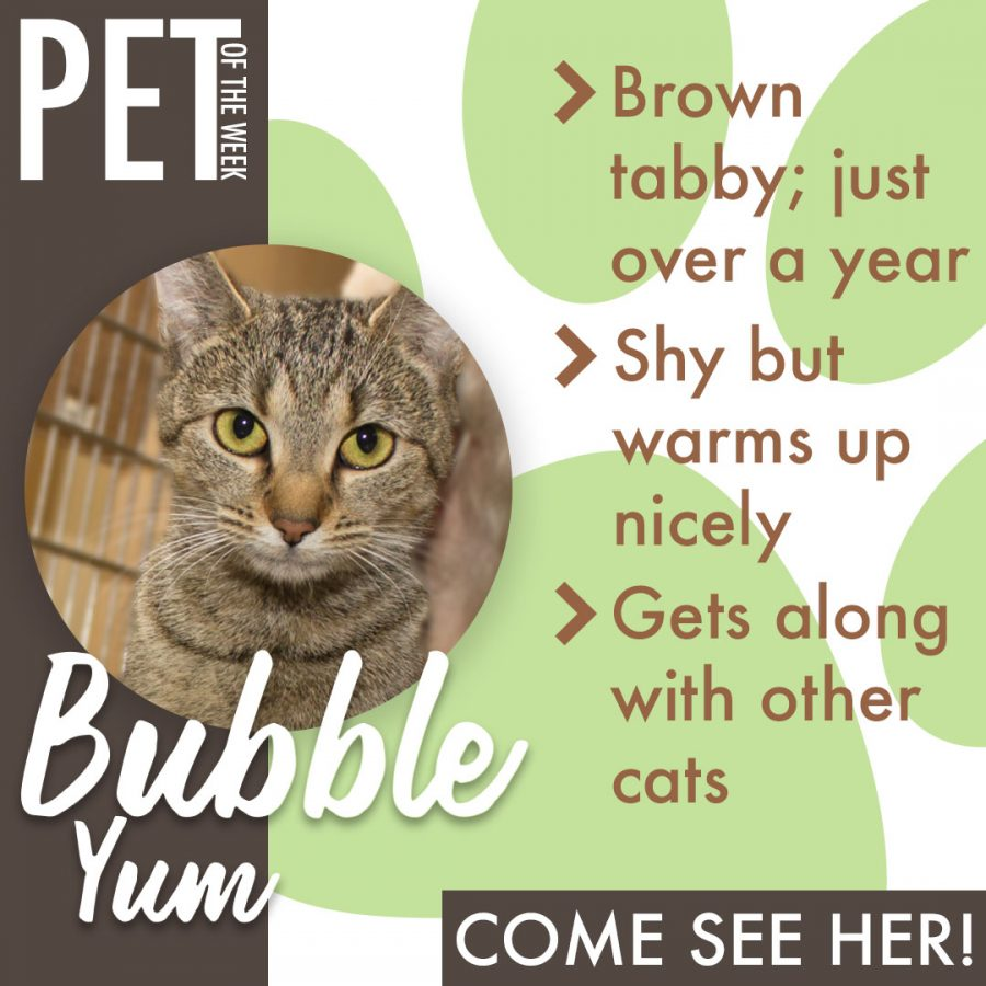 Pet of the Week(BubbleYum)