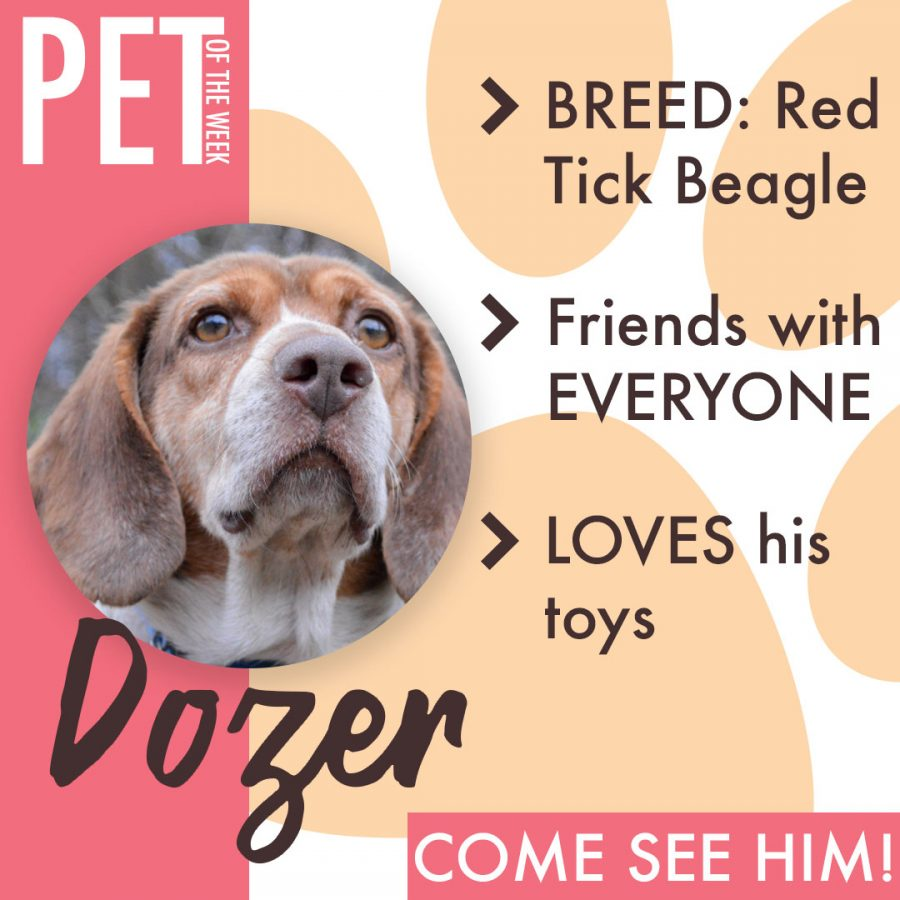 Animal Friends Pet of the Week: Dozer