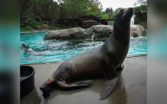 Pittsburgh Zoo community mourns the death of sea lion Zoey